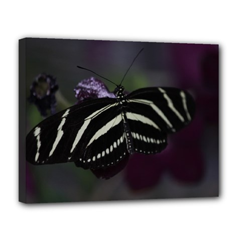 Butterfly 059 001 Canvas 14  x 11  (Framed)