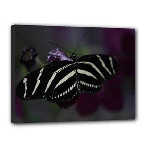 Butterfly 059 001 Canvas 16  X 12  (framed)