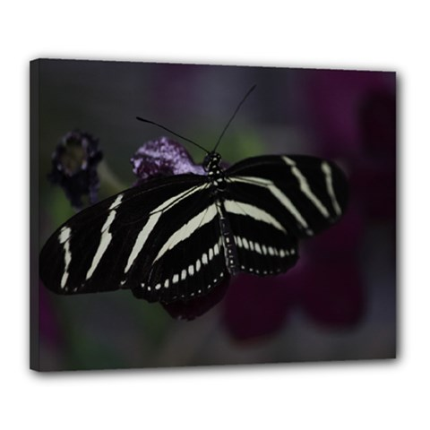 Butterfly 059 001 Canvas 20  x 16  (Framed)