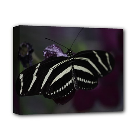 Butterfly 059 001 Deluxe Canvas 14  X 11  (framed)