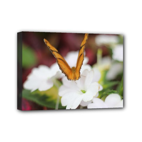 Butterfly 159 Mini Canvas 7  x 5  (Framed)