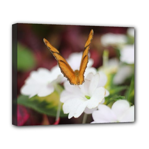 Butterfly 159 Deluxe Canvas 20  x 16  (Framed)