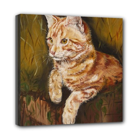 Cute Cat Mini Canvas 8  x 8  (Framed)