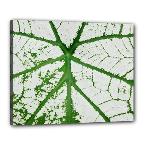 Leaf Patterns Canvas 20  X 16  (framed)