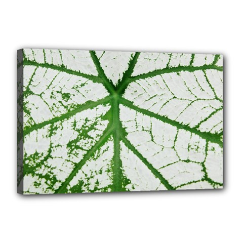 Leaf Patterns Canvas 18  x 12  (Framed)