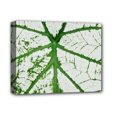 Leaf Patterns Deluxe Canvas 14  X 11  (framed)