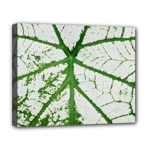 Leaf Patterns Deluxe Canvas 20  x 16  (Framed)