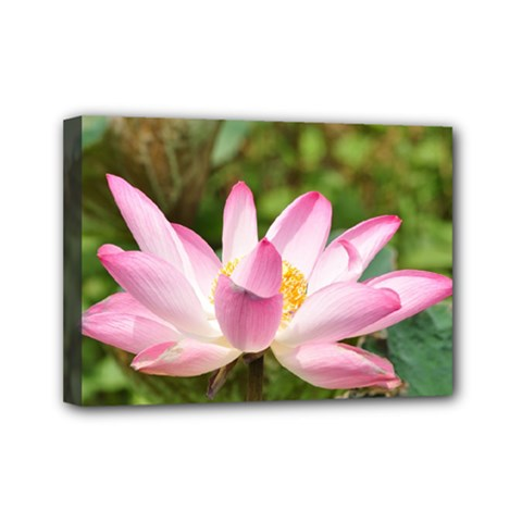 A Pink Lotus Mini Canvas 7  x 5  (Framed)