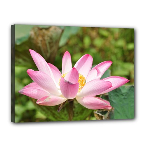 A Pink Lotus Canvas 16  x 12  (Framed)