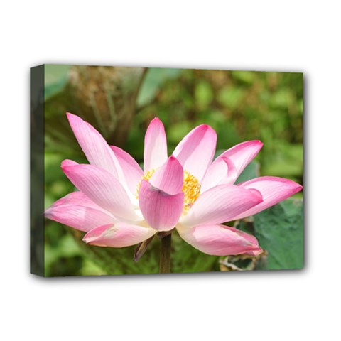 A Pink Lotus Deluxe Canvas 16  x 12  (Framed)