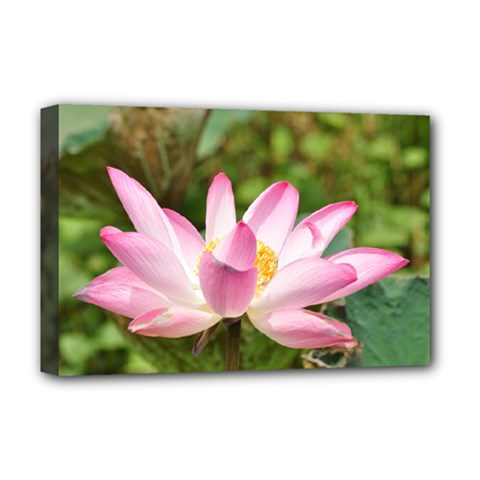 A Pink Lotus Deluxe Canvas 18  x 12  (Framed)