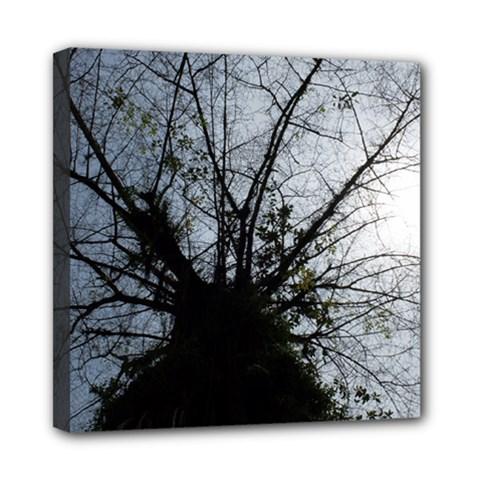 An Old Tree Mini Canvas 8  x 8  (Framed)