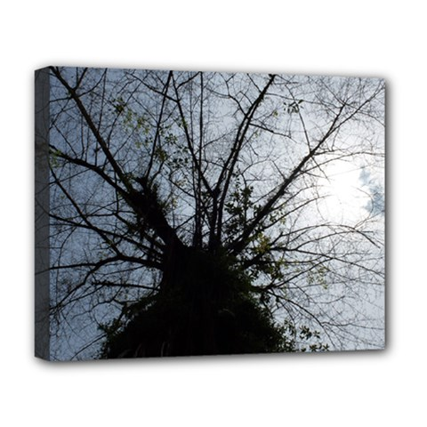 An Old Tree Deluxe Canvas 20  X 16  (framed)