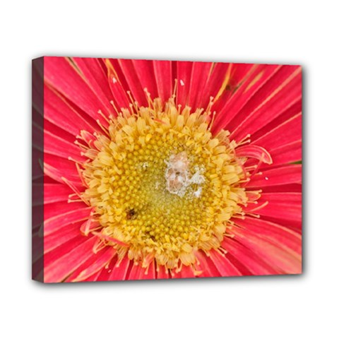 A Red Flower Canvas 10  x 8  (Framed)