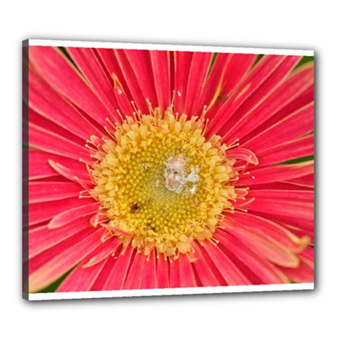 A Red Flower Canvas 24  X 20  (framed)