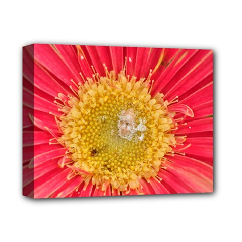 A Red Flower Deluxe Canvas 14  x 11  (Framed)