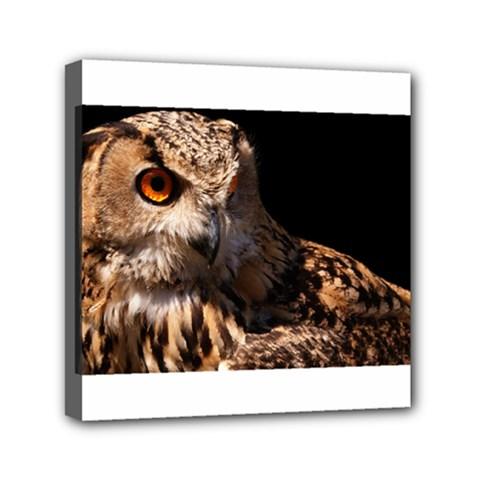 Owl Mini Canvas 6  x 6  (Framed)