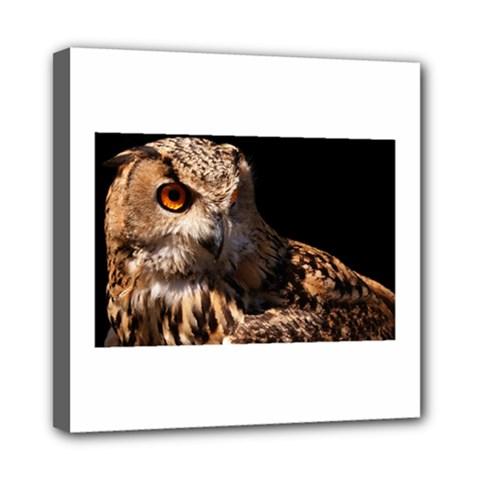 Owl Mini Canvas 8  X 8  (framed)