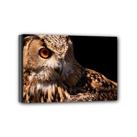 Owl Mini Canvas 6  x 4  (Framed)