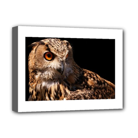 Owl Deluxe Canvas 16  X 12  (framed)