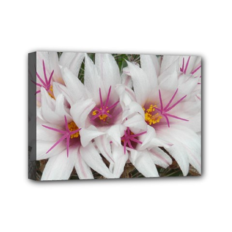 Bloom Cactus  Mini Canvas 7  X 5  (framed)
