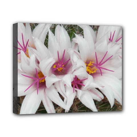 Bloom Cactus  Canvas 10  x 8  (Framed)