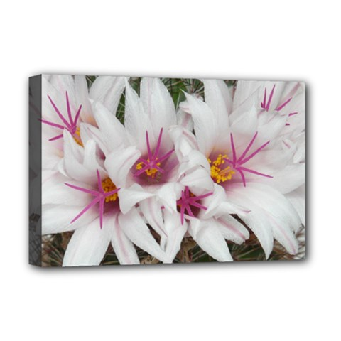 Bloom Cactus  Deluxe Canvas 18  X 12  (framed)