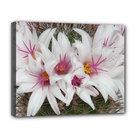 Bloom Cactus  Deluxe Canvas 20  X 16  (framed)