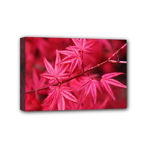 Red Autumn Mini Canvas 6  x 4  (Framed)