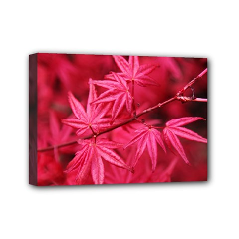 Red Autumn Mini Canvas 7  x 5  (Framed)