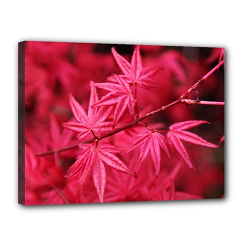 Red Autumn Canvas 16  x 12  (Framed)