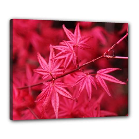 Red Autumn Canvas 20  X 16  (framed)
