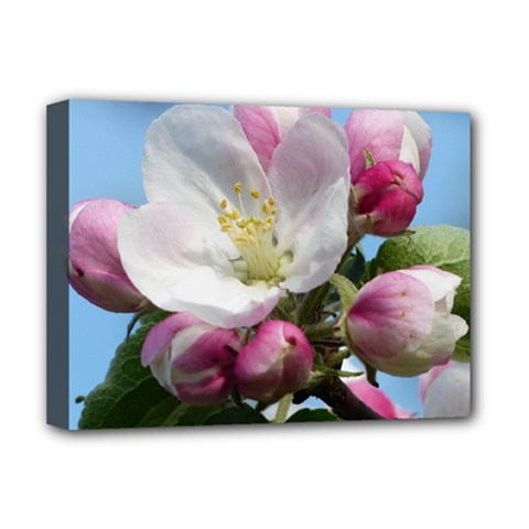 Apple Blossom  Deluxe Canvas 16  X 12  (framed)