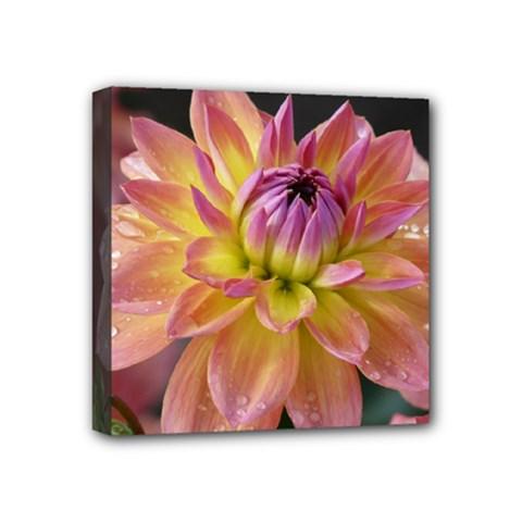 Dahlia Garden  Mini Canvas 4  X 4  (framed)