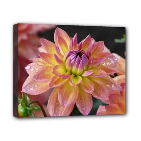 Dahlia Garden  Canvas 10  x 8  (Framed)