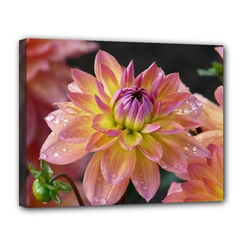 Dahlia Garden  Canvas 14  x 11  (Framed)