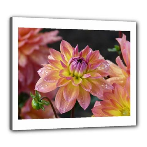 Dahlia Garden  Canvas 24  X 20  (framed)