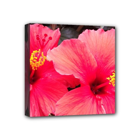 Red Hibiscus Mini Canvas 4  X 4  (framed)