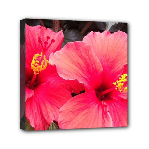 Red Hibiscus Mini Canvas 6  x 6  (Framed)