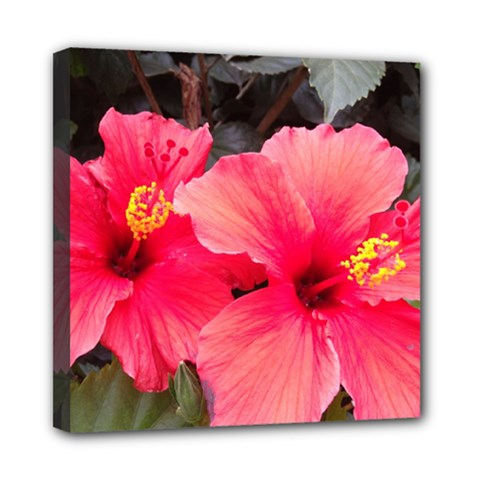 Red Hibiscus Mini Canvas 8  x 8  (Framed)