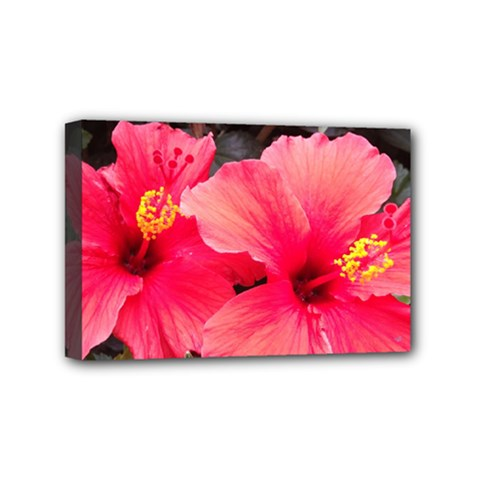 Red Hibiscus Mini Canvas 6  x 4  (Framed)