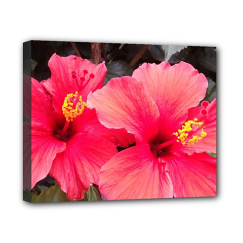 Red Hibiscus Canvas 10  x 8  (Framed)