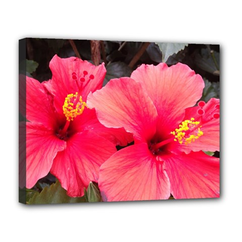 Red Hibiscus Canvas 14  X 11  (framed)