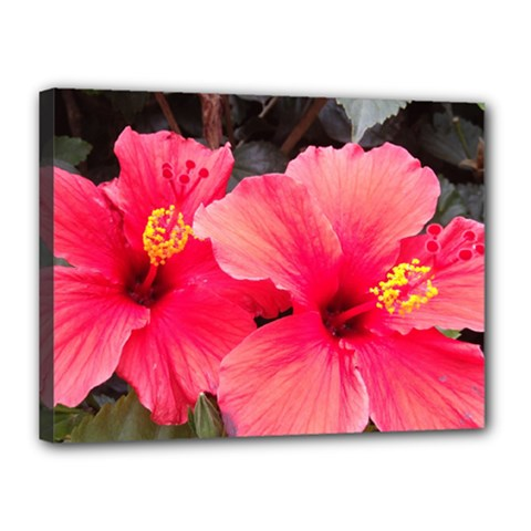Red Hibiscus Canvas 16  X 12  (framed)