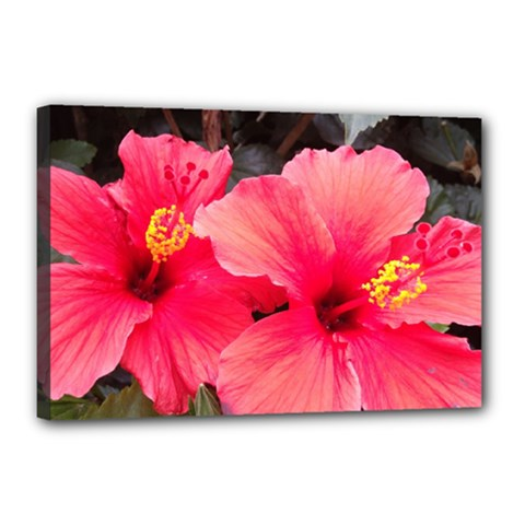 Red Hibiscus Canvas 18  x 12  (Framed)
