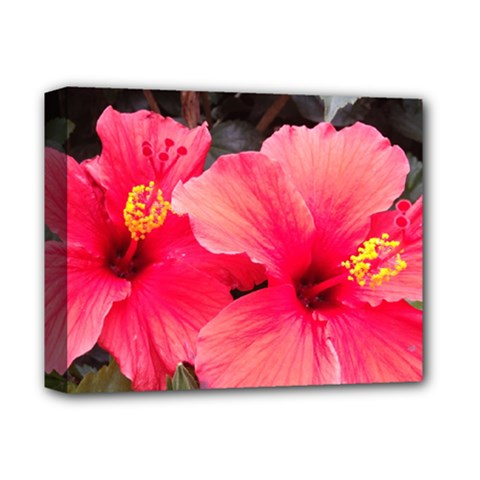 Red Hibiscus Deluxe Canvas 14  X 11  (framed)