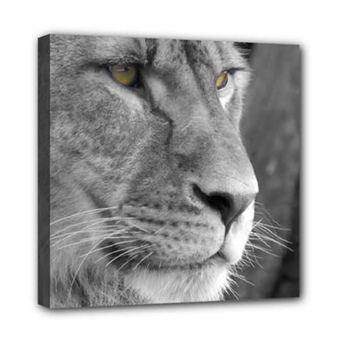 Lion 1 Mini Canvas 8  x 8  (Framed)