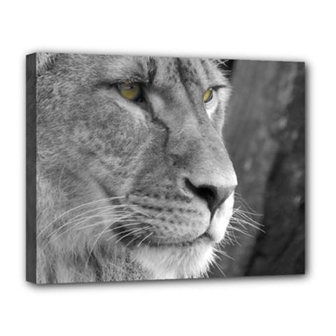 Lion 1 Canvas 14  x 11  (Framed)