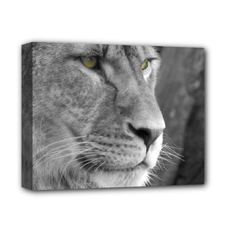 Lion 1 Deluxe Canvas 14  X 11  (framed)