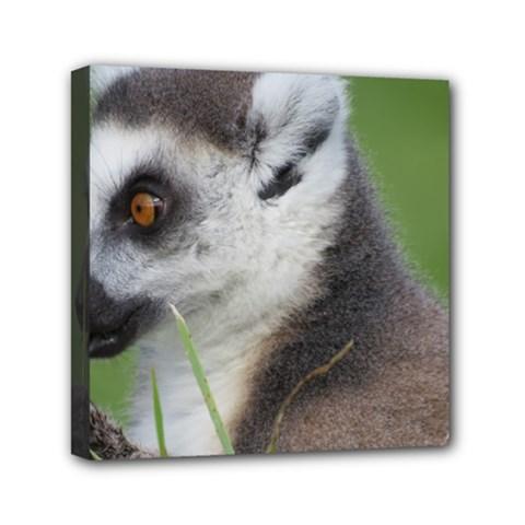 Ring Tailed Lemur  2 Mini Canvas 6  x 6  (Framed)